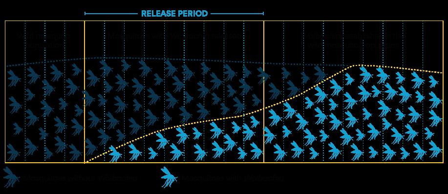 http://www.eliminatedengue.com/library/wolbachia-establishment-graph.png